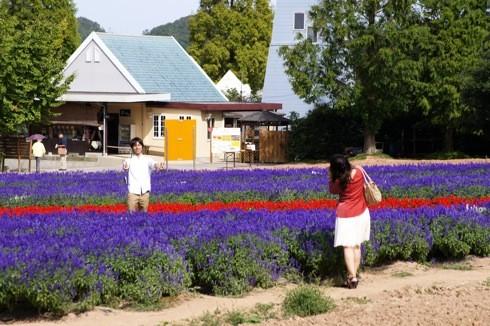 世羅高原農場 サルビア畑で写真
