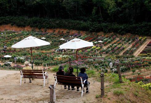 世羅高原農場 ダリア祭 画像38