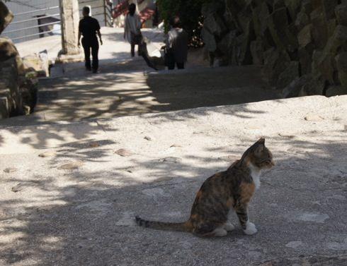 尾道 猫の通り道