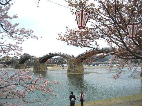 錦帯橋 と桜