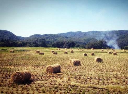 田んぼに置かれた藁の塊、サイレイジ