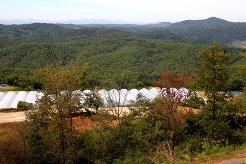 世羅ゆり園 から見る中国山地