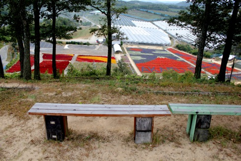 世羅ゆり園 天望の丘からの眺め3
