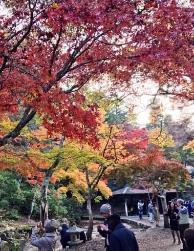 紅葉谷公園 2013 紅葉の様子 2