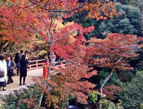紅葉谷公園 2013 紅葉の様子 3