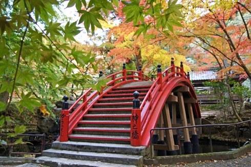 今高野山 紅葉の画像1