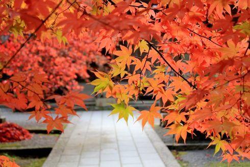今高野山 紅葉の画像8