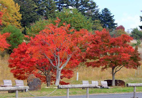もみのき森林公園 紅葉の写真5