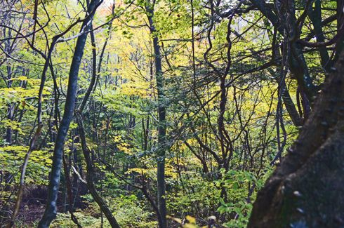 もみのき森林公園 森林の中