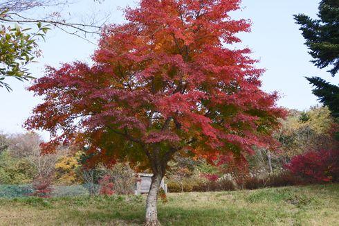 もみのき森林公園の 紅葉が見ごろ!広い敷地をサイクリングで