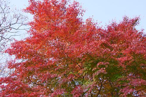 もみのき森林公園 紅葉の写真1