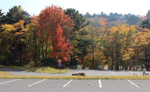 もみのき森林公園 紅葉の写真4