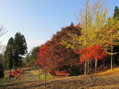 野呂山 紅葉 画像4
