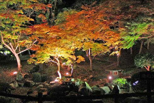 尾関山公園の 紅葉ライトアップ 画像2