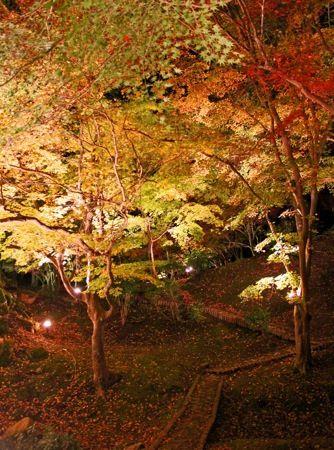 尾関山公園の 紅葉ライトアップ 画像4