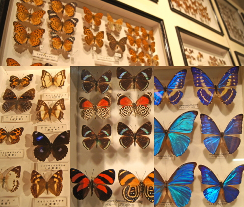 モグラ博物館(比和自然科学博物館) 画像8