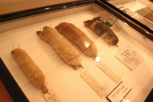 モグラ博物館(比和自然科学博物館) 画像5