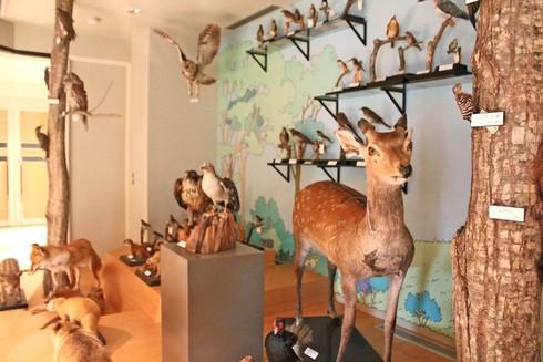 モグラ博物館(比和自然科学博物館) 画像6