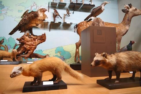 モグラ博物館(比和自然科学博物館) 画像11
