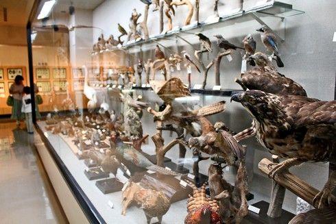 モグラ博物館(比和自然科学博物館) 画像14