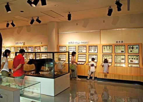 モグラ博物館(比和自然科学博物館) 画像7