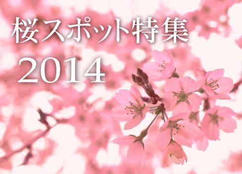 2014桜前線、いよいよ広島にも!桜スポット・見ごろまとめ