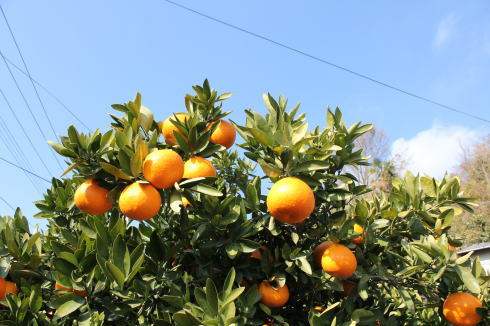 オレンジデー 画像