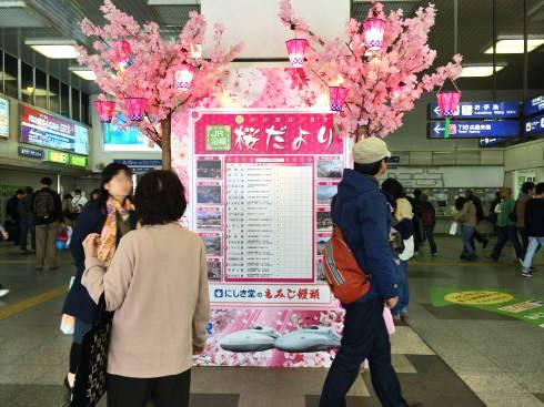 広島の桜だより 2014年もJR駅に掲出、名所案内も