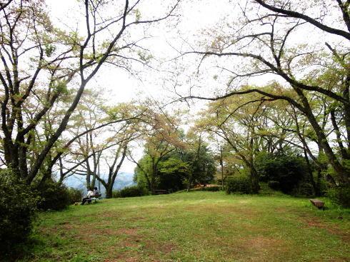 緑の桜 御衣黄(ぎょいこう) 画像14
