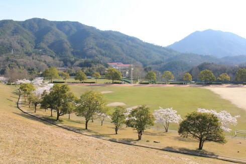 可部運動公園の桜 画像7