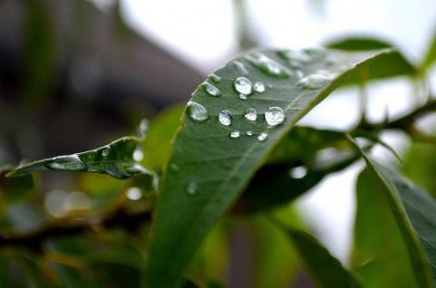 2014年の 穀雨(こくう)は4月20日、田畑潤し農業本格化