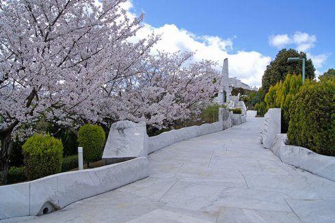 未来心の丘 桜も満開に