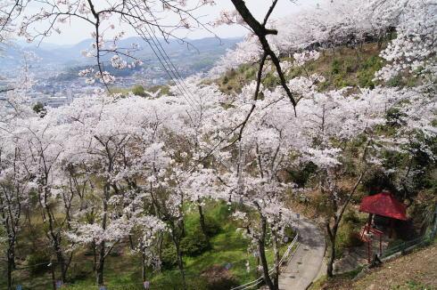 安芸津 正福寺山公園 画像4