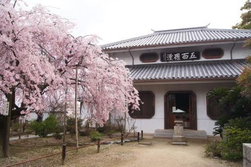 尾道 天寧寺 しだれ桜の画像4