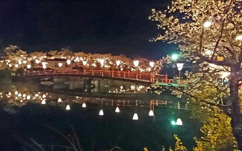 上野公園 夜桜が満開で美しく