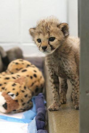 かわいい 幼い動物の写真 画像2