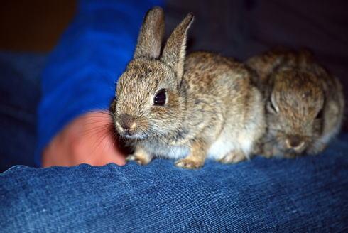 かわいい 幼い動物の写真 画像6