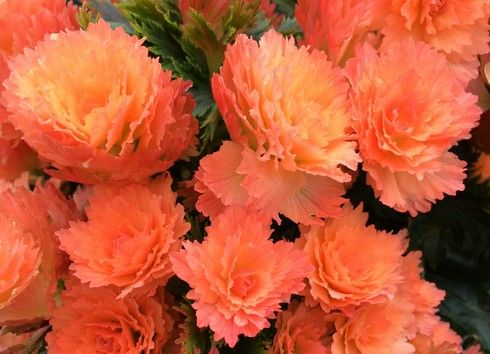 花びらがギザギザな珍しい花も