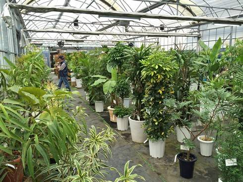 鉢花や観葉植物