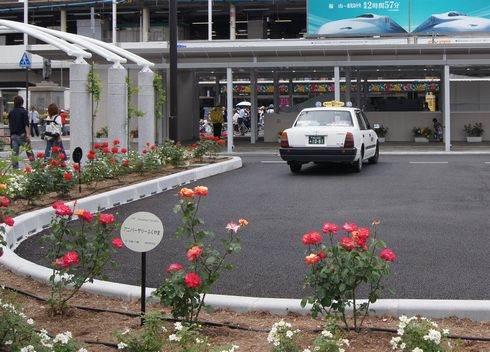 タクシー乗り場に、バラの花が