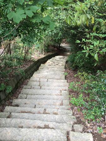 弥山登山 大聖院コース 画像6