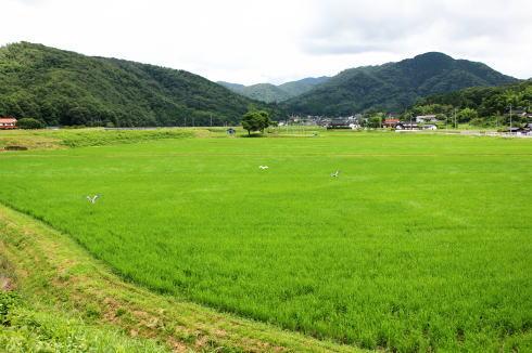 三次 田園風景