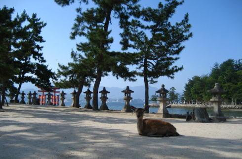 宮島の鹿 カメラ目線