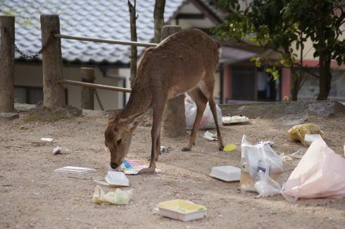 宮島の鹿とゴミ問題