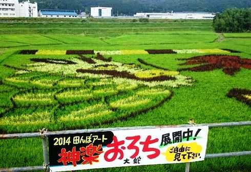 三次 田んぼアート、2014はヤマタノオロチ!色鮮やかな大蛇が登場