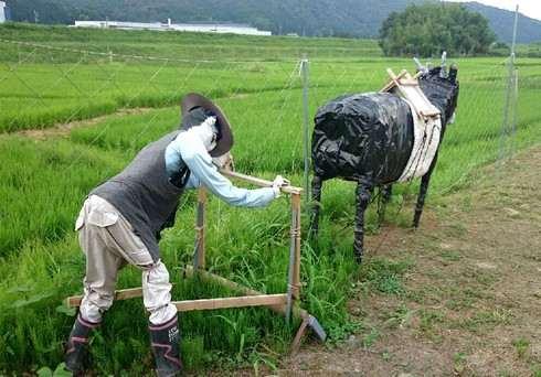牛とおじいちゃんカカシ
