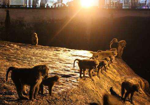 安佐動物園のナイトサファリ 猿山