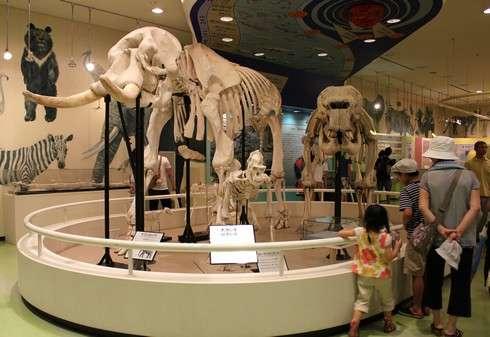 動物科学館でゾウの標本