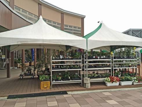 道の駅千代田で、苗の販売も