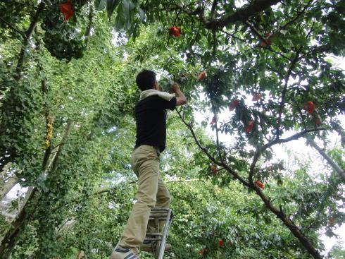 平田観光農園 ちょうど狩り 桃をゲット2